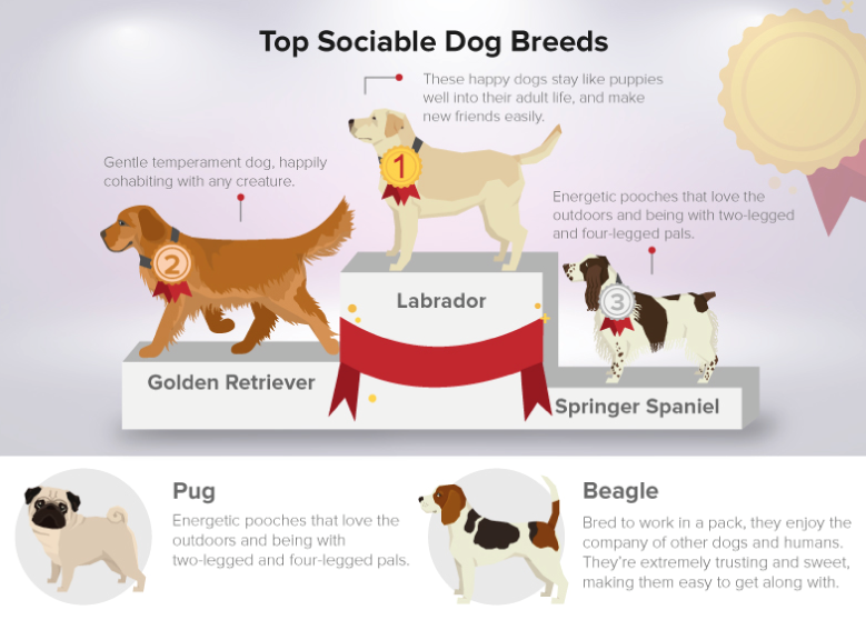 most sociable dog breeds