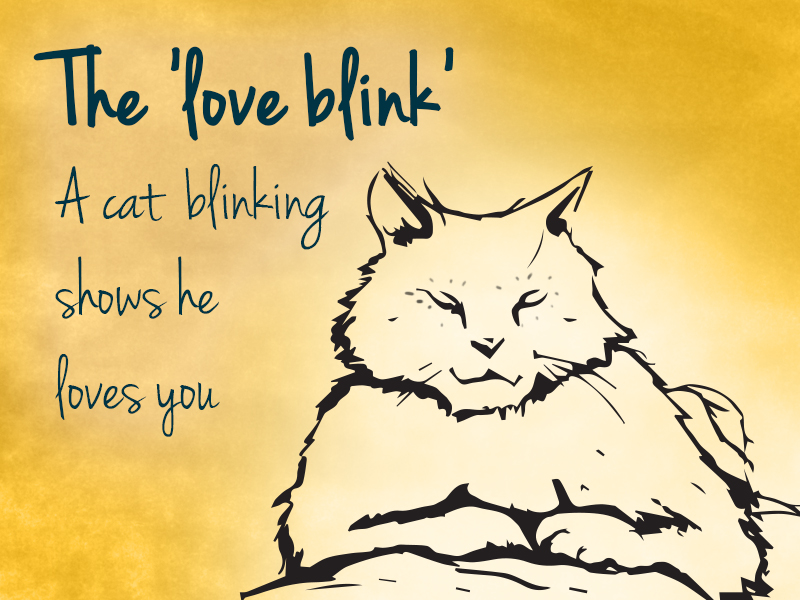 cat love blink