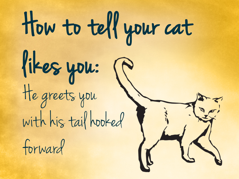 cat how to tell your cat likes you