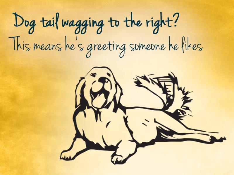dog wagging