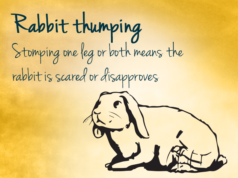 rabbit thumping