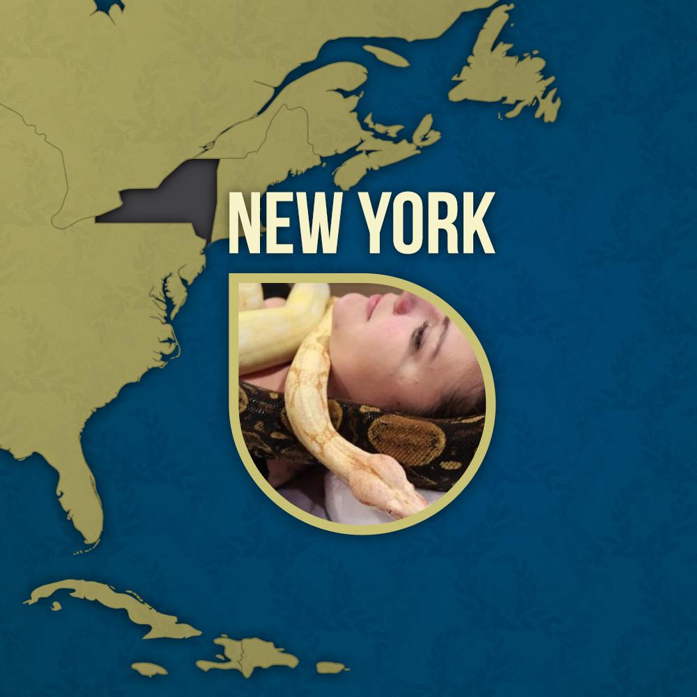 new york snakes