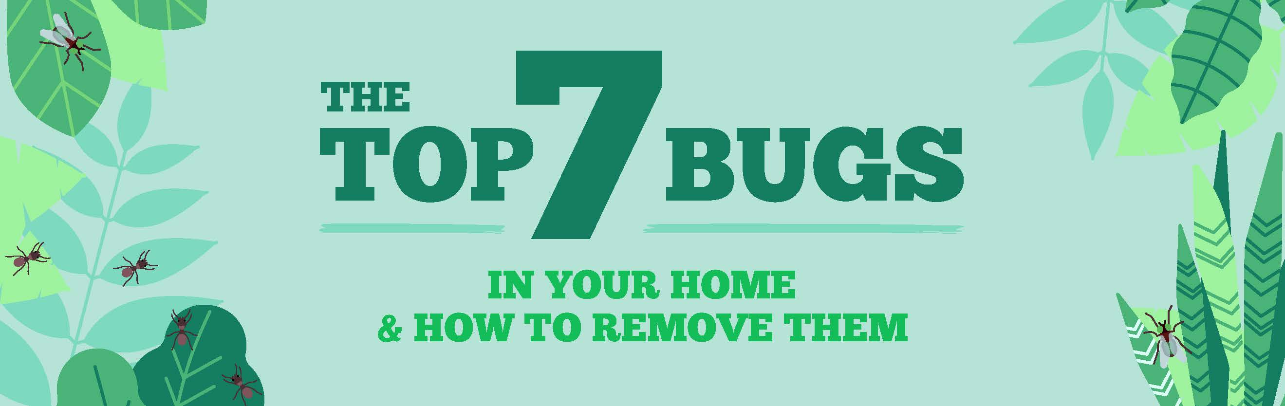 the top 7 bugs in your home and how to remove them title image