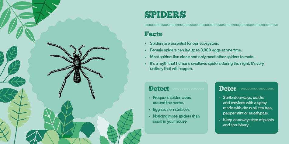 spiders - bugs in your home IAC